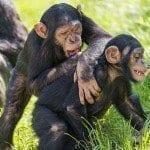 Associative Learning and Animal Behavior