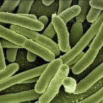 Nutrition and Metabolism in Photo-Autotrophic Bacteria