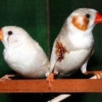 Darwinian Galapagos Finches and its Evolutionary Trends and Characteristics