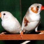 Darwinian Galapagos Finches and its Evolutionary Characteristics