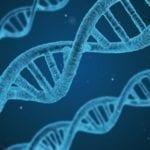 The Evidence of Cytoplasmic Control of Gene Translation