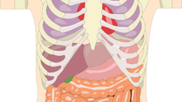Structure of the liver