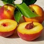 Complete Description of the Morphology of False Fruits
