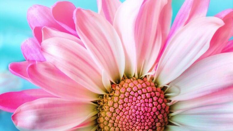 anatomy of a flower