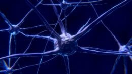 Hormonal and nervous communication