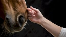 horses-have-an-extraordinary-ability-to-help-humans